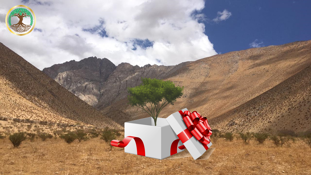 Gift a Legacy Tree_blog