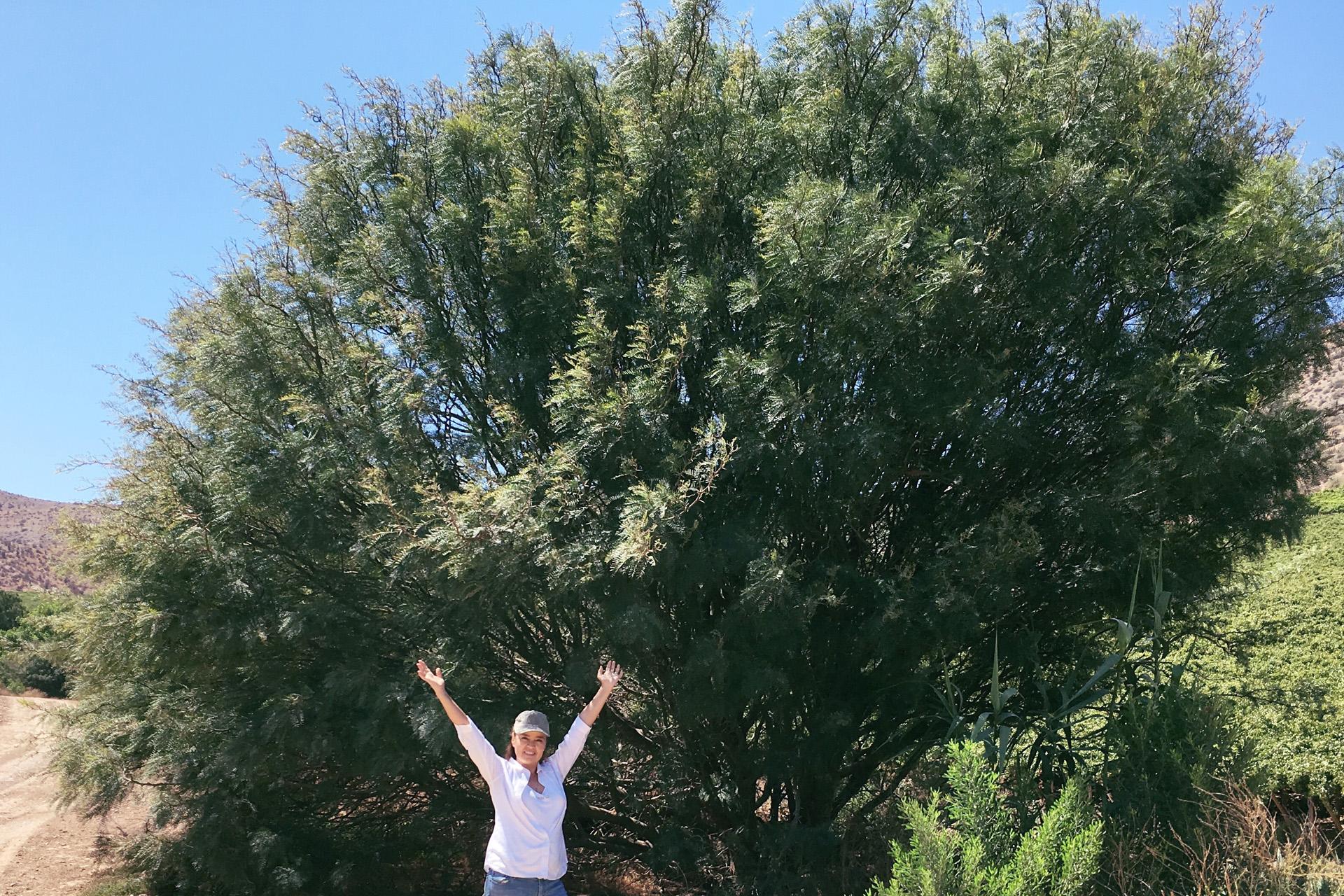 sponsor personal prosperity tree
