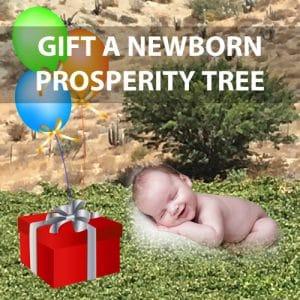 Gift a Newborn prosperity tree