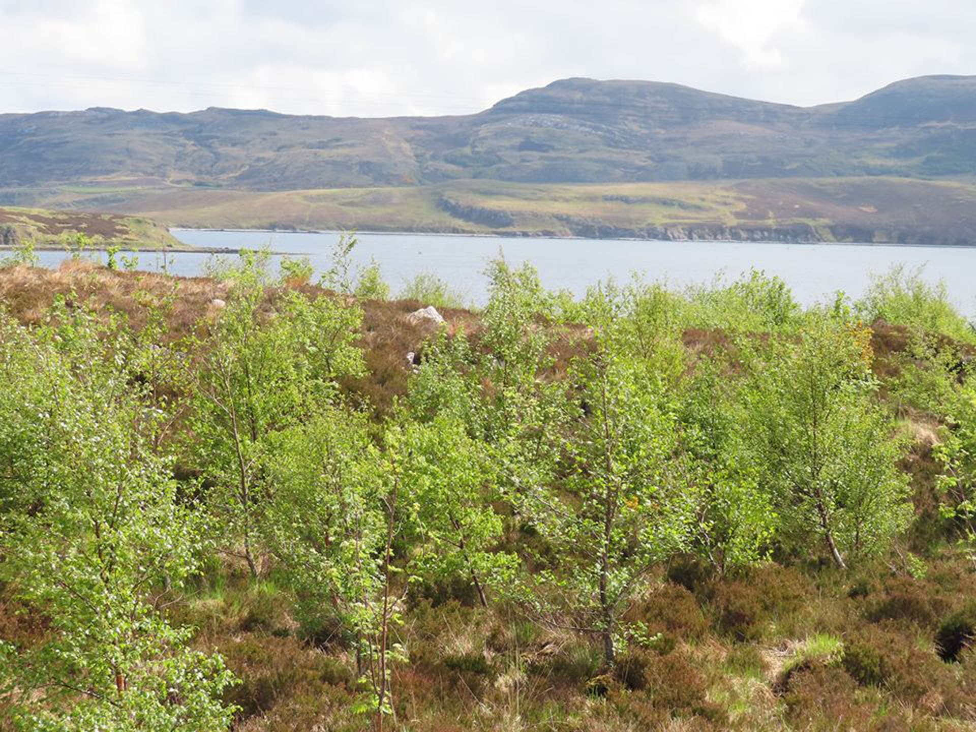 croft in summer planting trees in Scotland