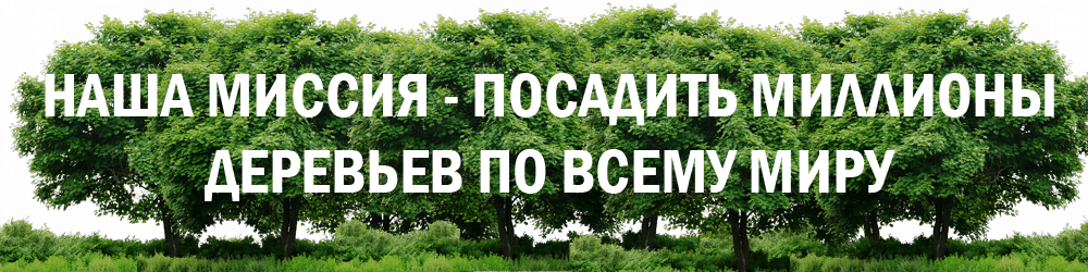 Legacy Tree Mission Russian