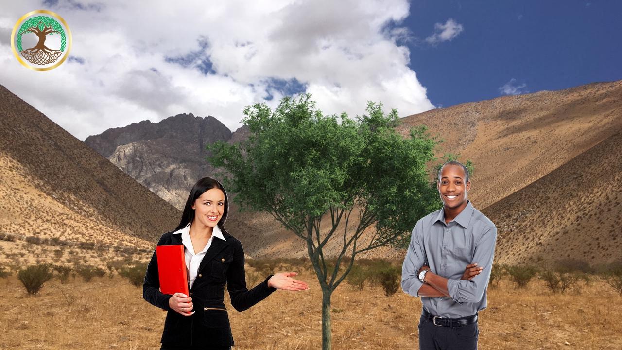 Sponsor a Company Legacy Tree